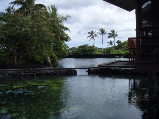 Big Island Ocean View Pualani Tropical Beach House Bikes
